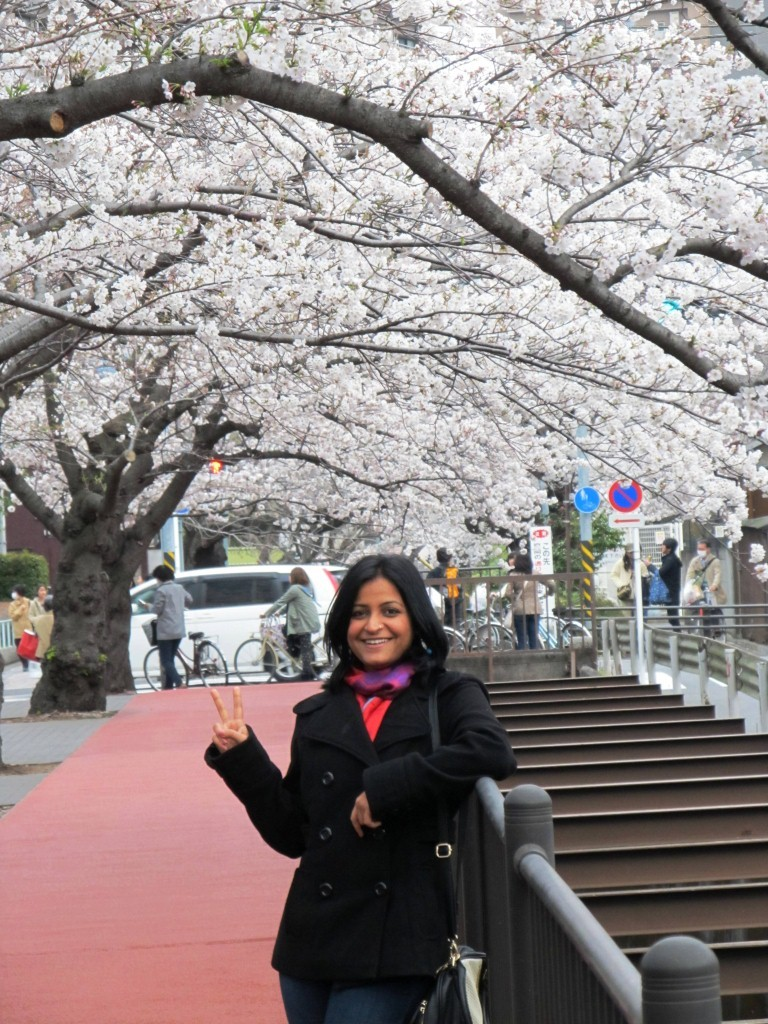 My pic on Ofuna bridge , cherry blossom, March 2013